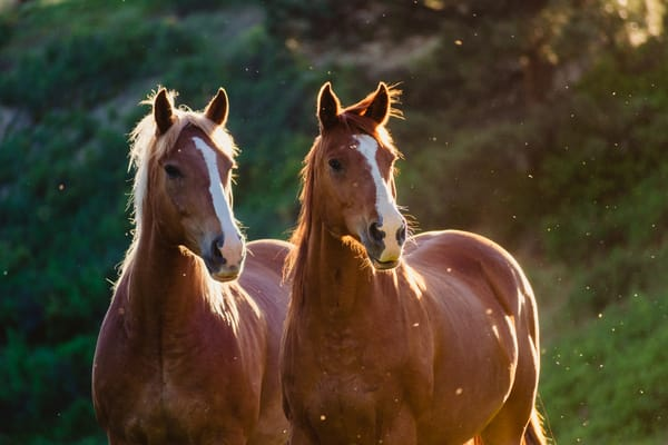Fine Art Horse Photography | Wishes