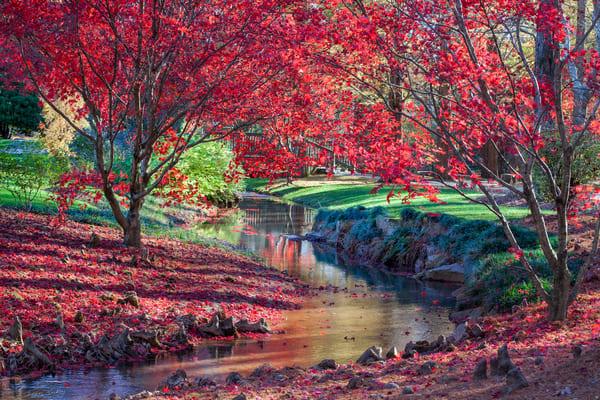 Red Maple Stream Photography Art | Thomas Yackley Fine Art Photography
