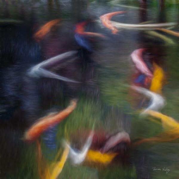 Swimming Koi  Photography Art   Thomas Yackley Fine Art Photography