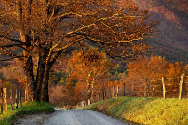 Autumn At Sparks Lane Photography Art | Thomas Yackley Fine Art Photography