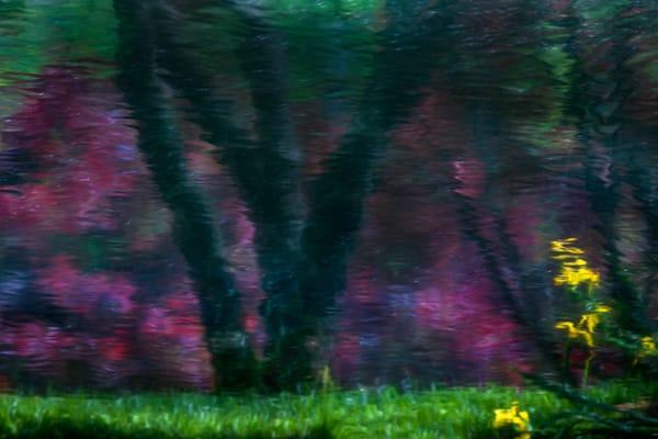 Deep Reflection Photography Art   Thomas Yackley Fine Art Photography