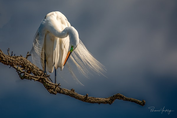 Take A Bow! Photography Art | Thomas Yackley Fine Art Photography