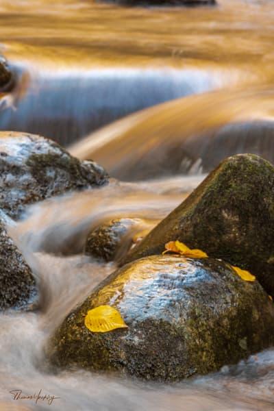 Golden Cascades At Tremont Photography Art | Thomas Yackley Fine Art Photography