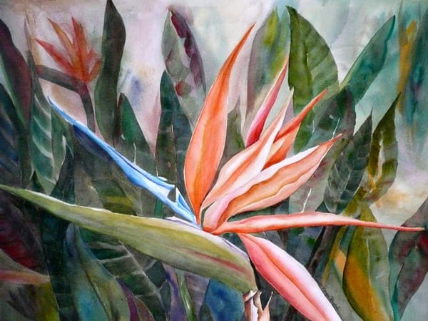Bird of Paradise, from an Original Watercolor Painting