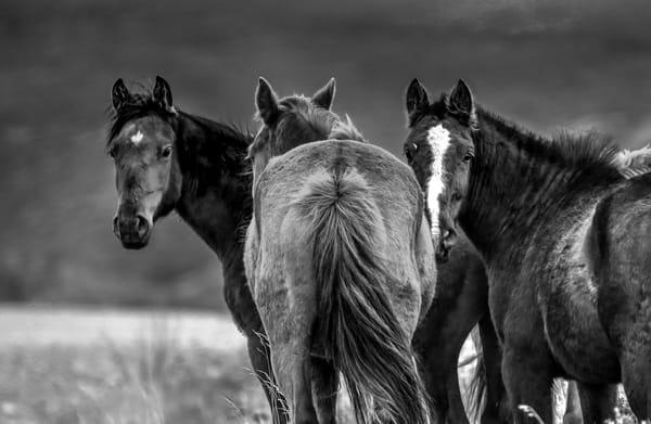 Horses of Patagonia