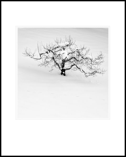 Orchard Tree Art | Roy Fraser Photographer