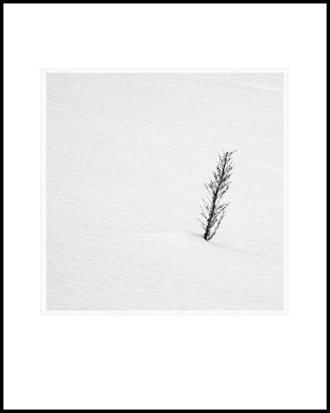 Survivor Art | Roy Fraser Photographer