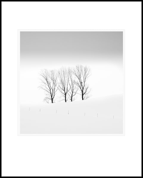 Three Trees Art | Roy Fraser Photographer