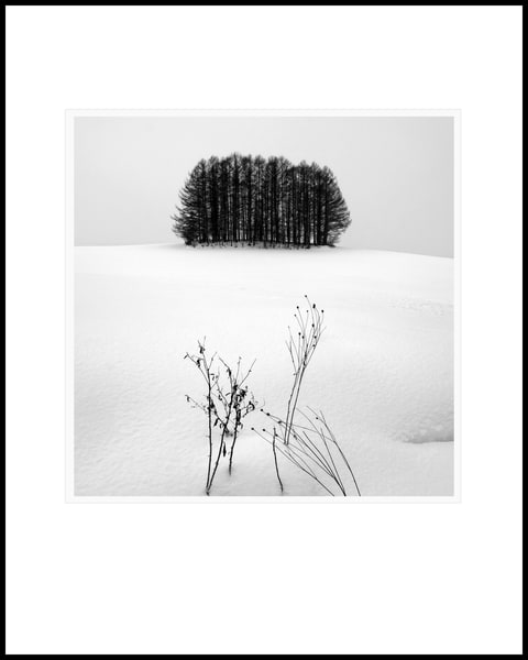 Tree Copse Study1 Art | Roy Fraser Photographer
