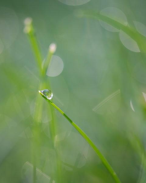 Softest Summer - Art Print - Tamea photography