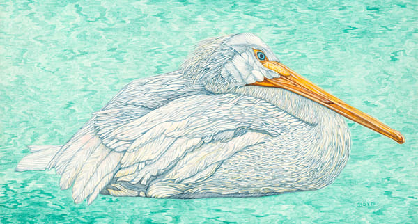 American White Pelican. Watercolor by Judy Boyd