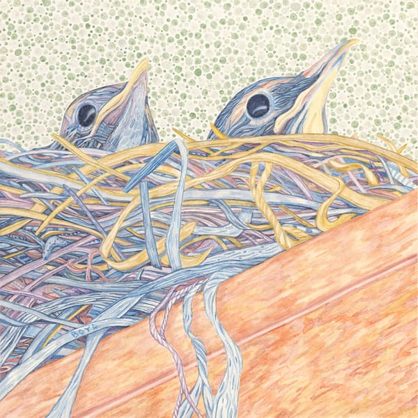 Fine art reproduction of Robin's nest with chicks, by Judy Boyd.