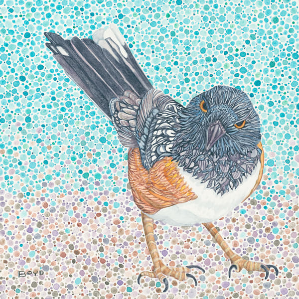 Fine art reproduction of Spotted Towhee watercolor by Judy Boyd.