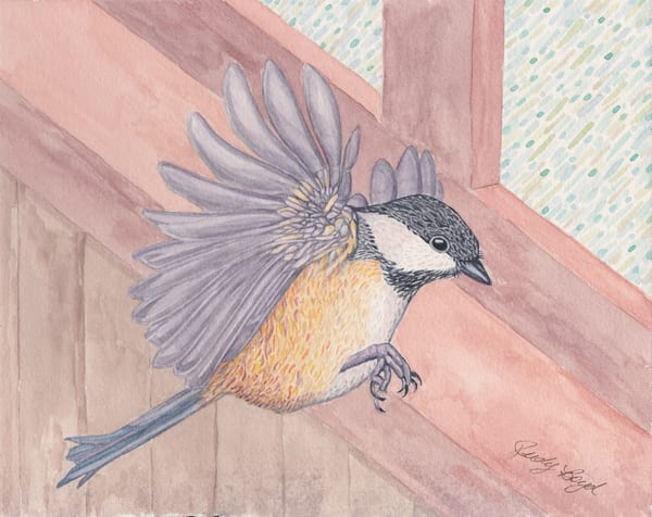 Black-Capped Chickadee. Fine art reproduction by watercolor artist Judy Boyd