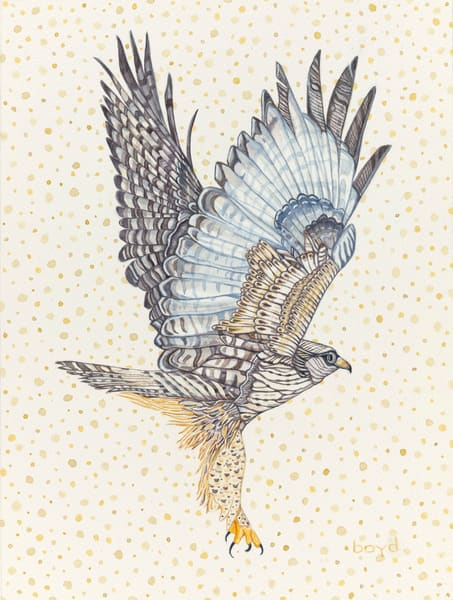 Fine art reproduction of Rough-legged Hawk painting by Judy Boyd Watercolors.