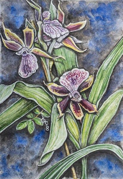 Foxtail Orchids
