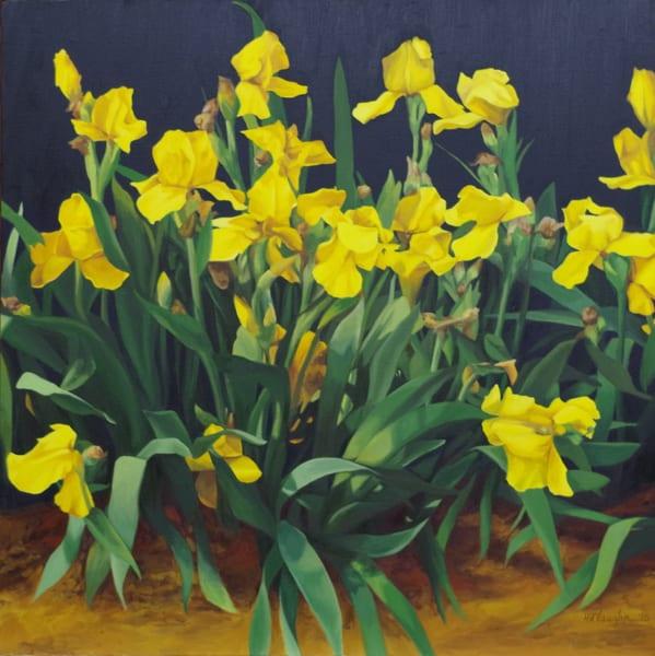 Yellow Iris Art | Helen Vaughn Fine Art