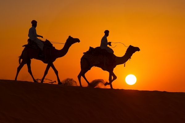 Two Camels Walking Photography Art | nancyney