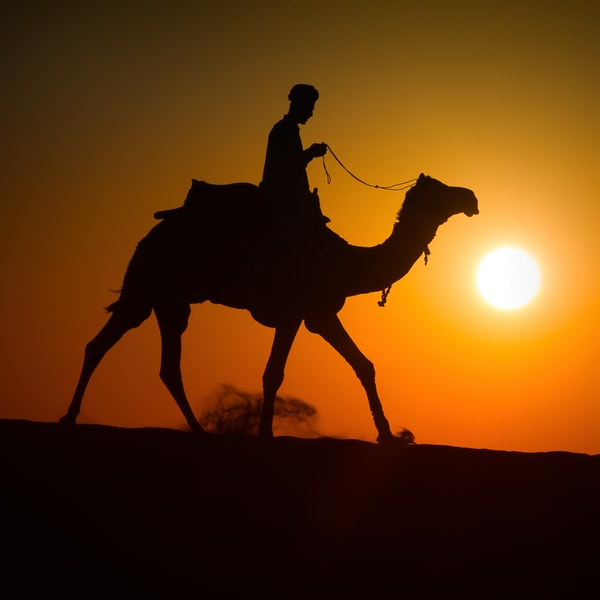 Lone Camel Rider Photography Art | nancyney