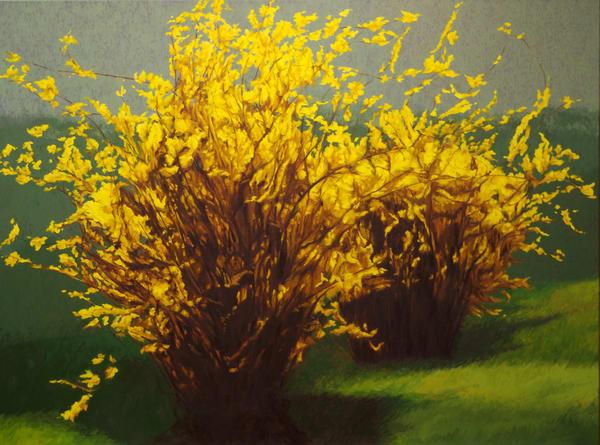 Forsythia In The Time Of Corona Art   Helen Vaughn Fine Art