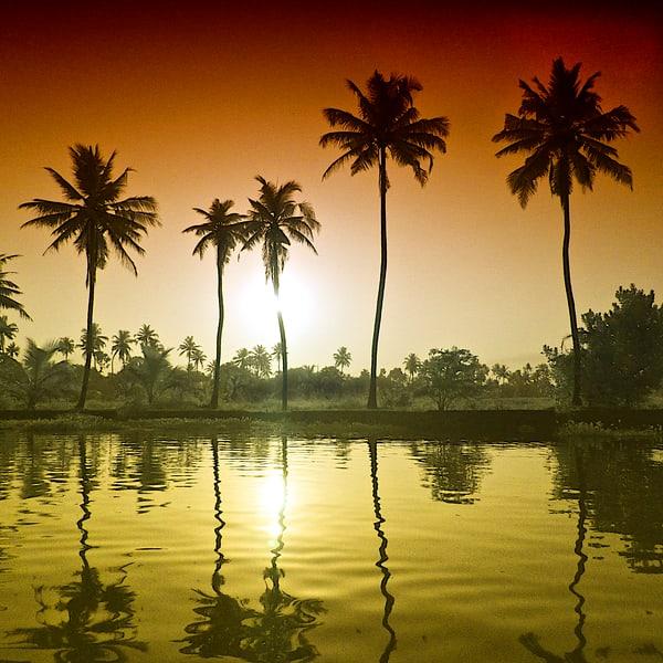 Palm Reflections Photography Art | nancyney