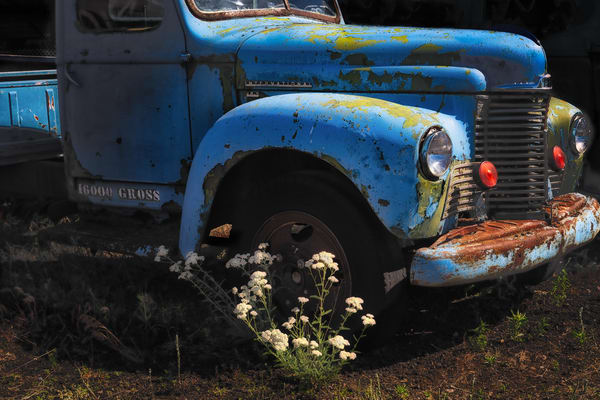 Blue Truck With Flowers Photography Art | nancyney