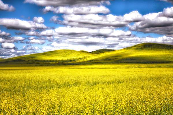 Summer Meadow Photography Art | nancyney