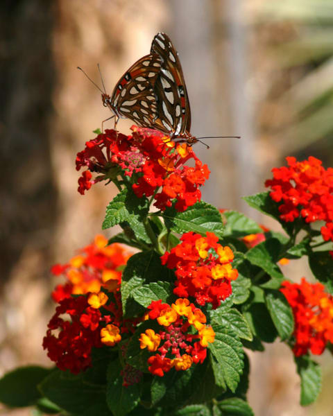 Butterfly Duet Photography Art   It's Your World - Enjoy!
