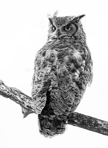 Great Horn High Key Photography Art | offleashphotography