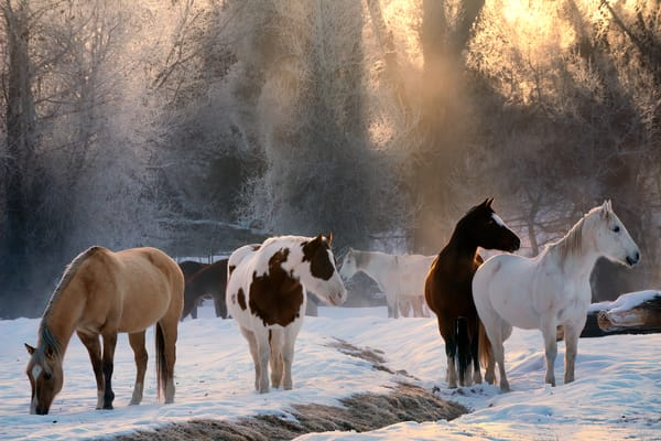 Backlit Horses Photography Art | nancyney
