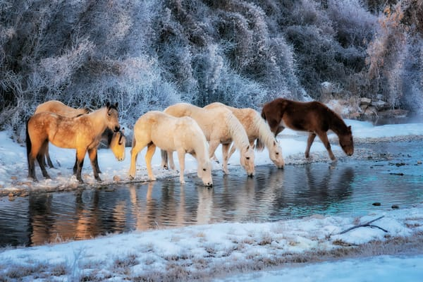 Winter Wonderland Photography Art | nancyney