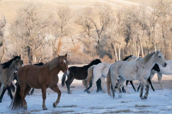 Running Horses Photography Art | nancyney