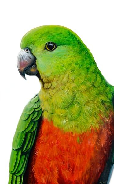 Grace - King Parrot