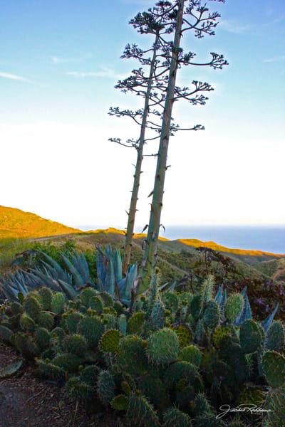 canyon landscape cactus