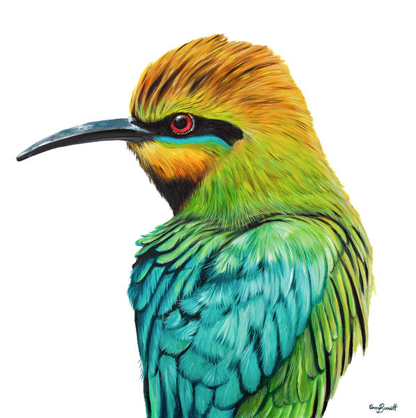 Stan - Rainbow Bee-eater