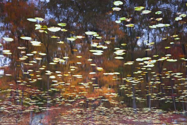 Color landscape reflection