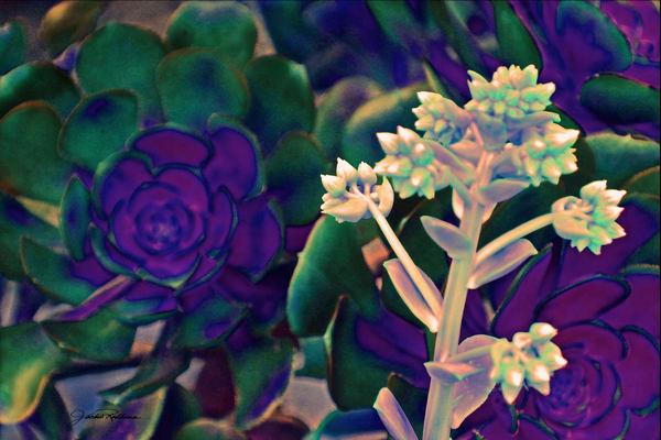 natural-art-wallpaper purple-green