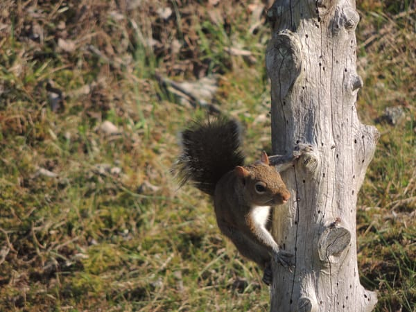 Sneaky Squirrel Photography Art | N2 the Woods Photography