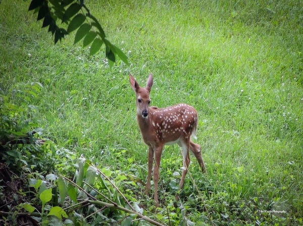 Fawn Photography Art | N2 the Woods Photography