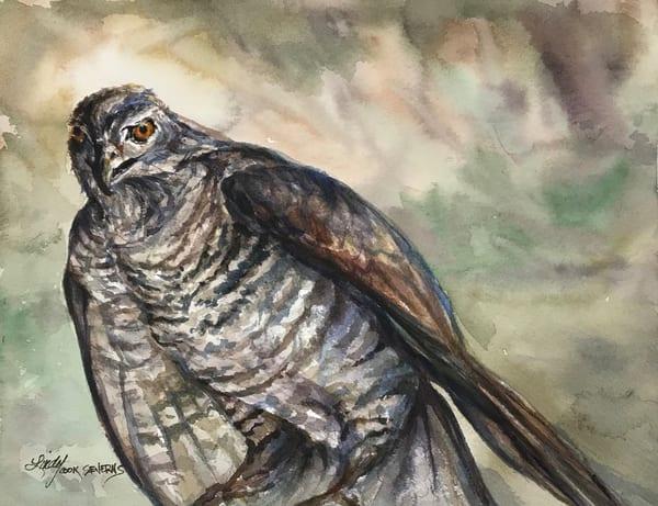 Lindy Cook Severns Art | Hawk Eye, signed edition