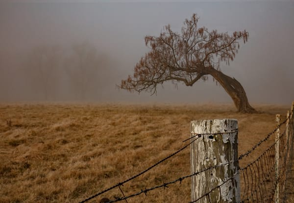 Fog Tree Post Mgd 0 W5 A9755 Cdc19 Fs Photography Art | Koral Martin Fine Art Photography