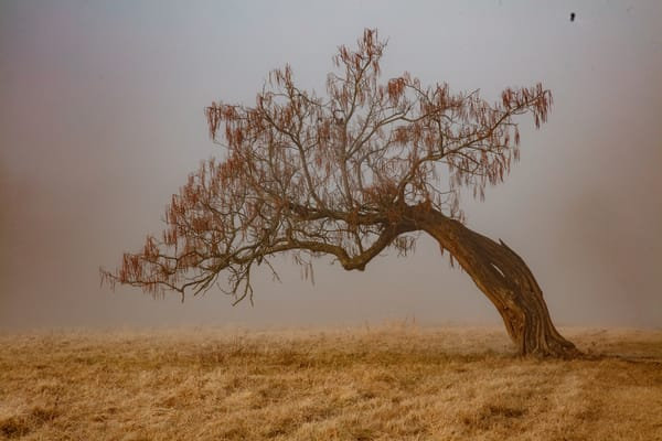 Old Tree With Fog 9761 Photography Art | Koral Martin Fine Art Photography