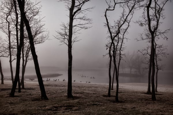 Foggy Pond With Geese 9691 A2 Photography Art | Koral Martin Fine Art Photography