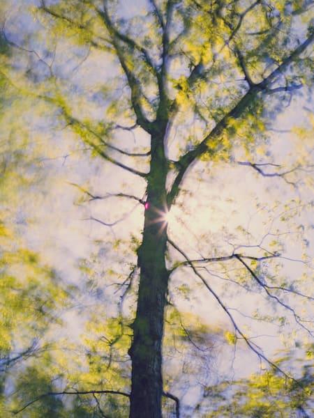 Nature Color 0224 Photography Art | Dan Chung Fine Art