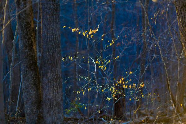 Nature Color 0779 Photography Art   Dan Chung Fine Art