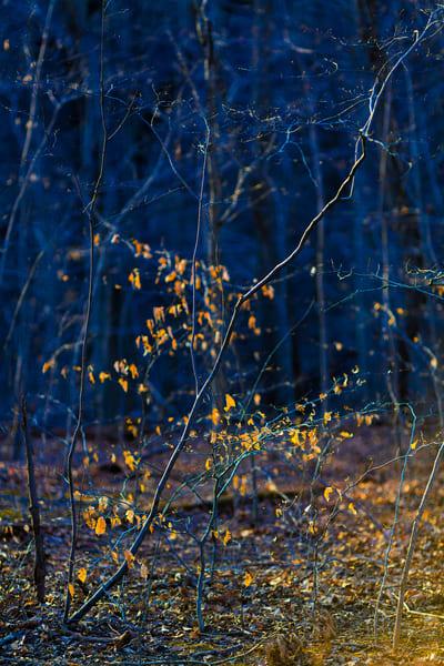 Nature Color 0776 Photography Art   Dan Chung Fine Art
