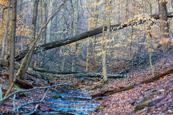 Nature Color 0798 Photography Art | Dan Chung Fine Art