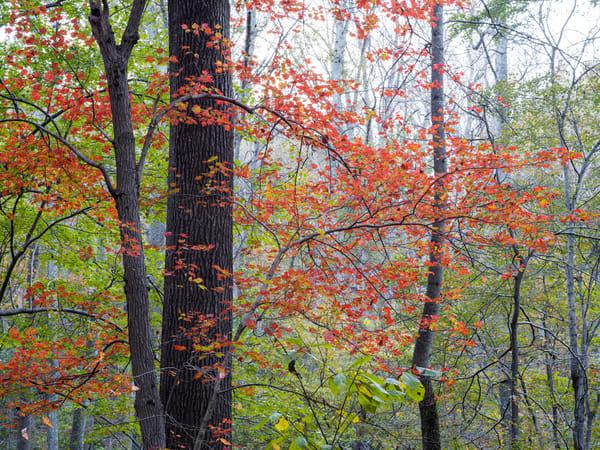 Nature Color 0997 Photography Art | Dan Chung Fine Art