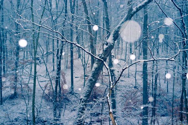 Nature Color 2593 Photography Art | Dan Chung Fine Art