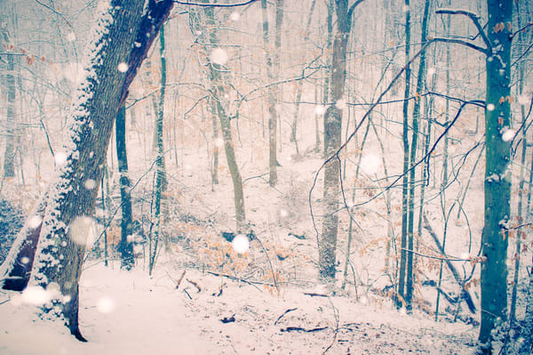 Nature Color 2641 Photography Art | Dan Chung Fine Art